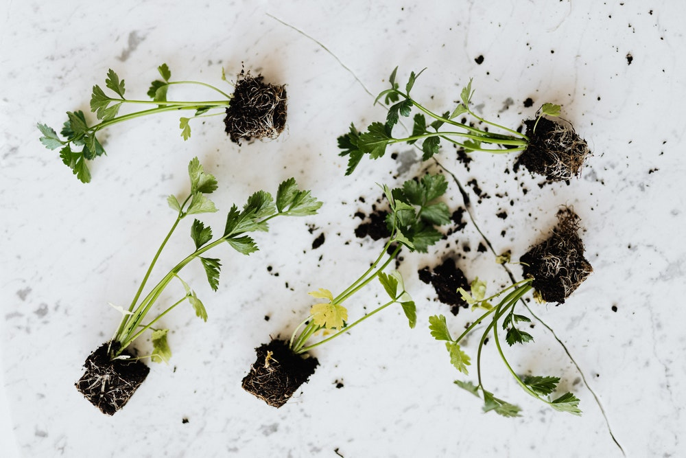 herbs with soil